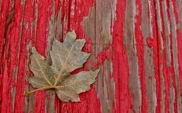 дерево, краска, лист, доски