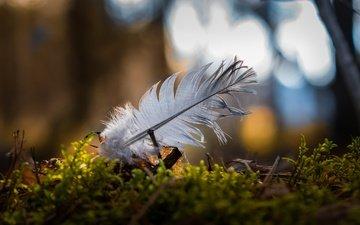 природа, макро, мох, перо, боке, перышко
