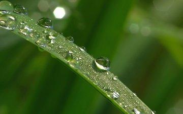 трава, макро, утро, роса, капли, травинка, листья, грин