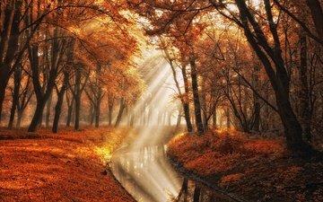 свет, деревья, вода, природа, лучи, парк, осень, канал, фотограф, lars van de goor