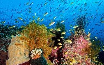 вода, природа, море, рыбы, океан, под водой, кораллы, водоросли, подводный мир