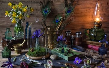 flowers, lamp, feathers, bottle, shell, book, narcissus, still life, iris, mortar, hellebore