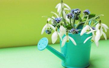 цветы, весна, незабудки, подснежники, натюрморт, лейка