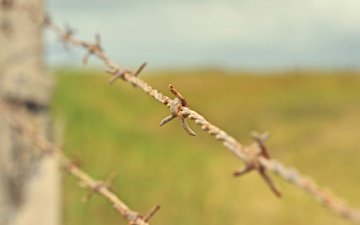 macro, wire, the fence, barbed wire, rusty