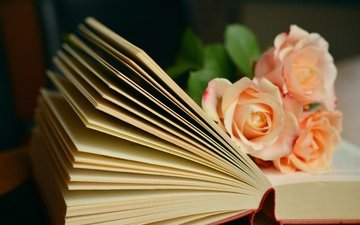 flowers, roses, book, page