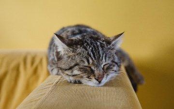 морда, кот, кошка, сон, лежит, полосатый