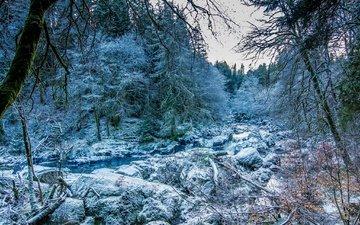 деревья, снег, камни, зима, ручей, шотландия