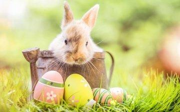 цветы, трава, кролик, пасха, цветы, глазунья, декорация, весенние, зеленые пасхальные, довольная, зайка, яйца крашеные