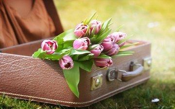цветы, трава, природа, тюльпаны, чемодан