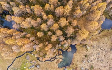 trees, nature, the view from the top, autumn, ponds