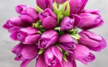 цветы, букет, тюльпаны, розовые, красива, тульпаны, цветы, парное, весенние, пинк, лиловая