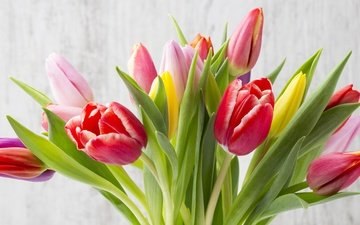 цветы, букет, тюльпаны, дерева, красива, тульпаны, цветы, парное, красочная