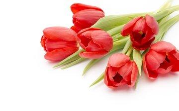 цветы, красные, букет, тюльпаны, романтик, краcный, красива, тульпаны, цветы, парное, пинк