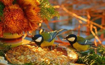 цветы, птицы, птички, цветы, крошки, синицы, пернатые