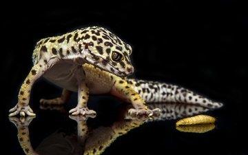 насекомое, отражение, ящерица, гусеница, геккон, рептилия