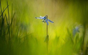 трава, макро, фон, цветок