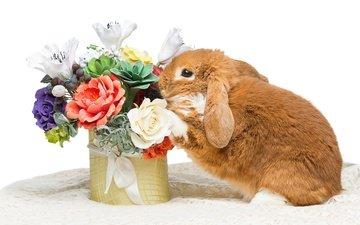 цветы, кролик, пасха, цветы, глазунья, декорация, весенние, зеленые пасхальные, довольная, зайка