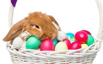 корзина, кролик, пасха, глазунья, декорация, весенние, зеленые пасхальные, довольная, зайка, яйца крашеные