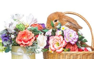 цветы, корзина, кролик, пасха, цветы, глазунья, декорация, весенние, зеленые пасхальные, довольная, зайка