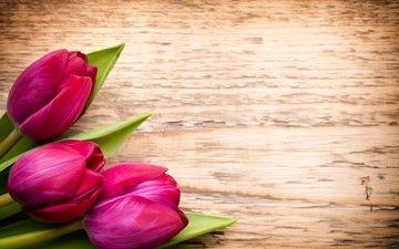 цветы, букет, тюльпаны, розовые, дерева, тульпаны, цветы, парное, пинк