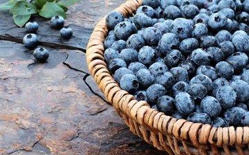 ягоды, лесные ягоды, черника, корзинка, дерева, голубика, парное, черничный