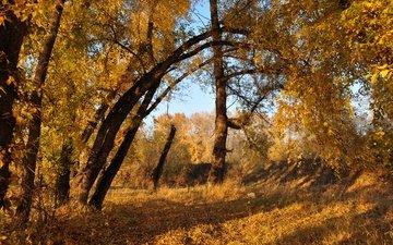 деревья, листва, осень, расцветка, деревь, опадают, осен, листья