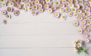 цветы, фон, доски, ромашки, цветком, летнее, пинк