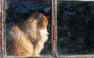 кот, кошка, пушистый, дом, окно, рыжий