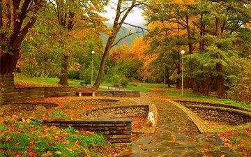 деревья, парк, листва, осень, собака, расцветка, деревь, опадают, осен, листья