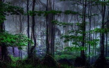 деревья, природа, лес, туман, листва, темнота, тропический