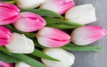 цветы, букет, тюльпаны, розовые, белые, белая, тульпаны, цветы, весенние, пинк