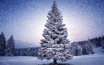 деревья, снег, природа, зима, пейзаж, снегопад