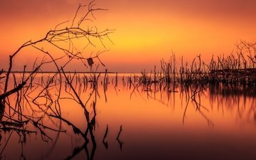 lake, branches, silhouettes, glow