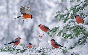 снег, елка, зима, снеговик, птицы, снегирь, снегири