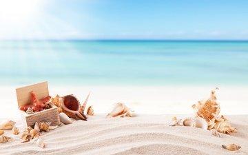 солнце, море, песок, пляж, лето, ракушки, морская звезда, песка, seashells, каникулы, летнее