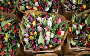 цветы, бутоны, красочные, тюльпаны, букеты, alice achterhof