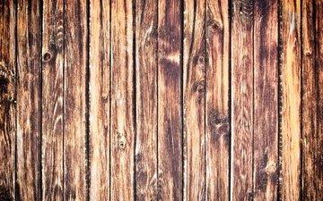 tree, texture, board