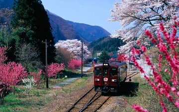 mountains, flowering, japan, spring, train, gunma prefecture