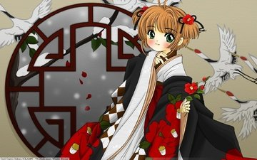 art, snow, girl, petals, look, hair, face, window, kimono, clamp, cranes, camellia, sakura:collector cards, cardcaptor sakura, sakura kinomoto