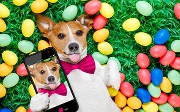 трава, собака, юмор, телефон, пасха, джек-рассел-терьер, яйца крашеные