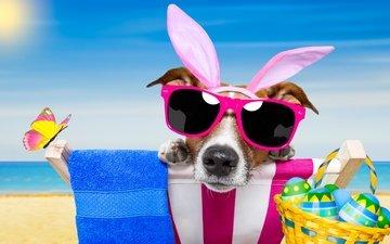 пляж, очки, собака, юмор, бабочки, пасха, яйца, зайчик, зеленые пасхальные