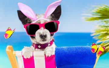 пляж, очки, собака, юмор, бабочки, зайчик