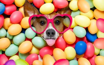 glasses, dog, easter, language, hearts, the painted eggs