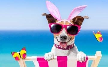 пляж, очки, собака, юмор, бабочки, bunny ears