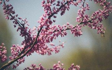 цветы, дерево, цветение, макро, весна, karl fredrickson