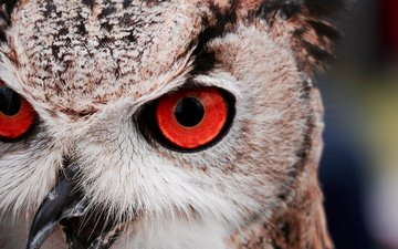 природа, птица, животное, филин, оперение, massimo mancini
