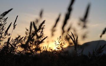 небо, трава, природа, поле, колоски, силуэт, сумерки, matt milton