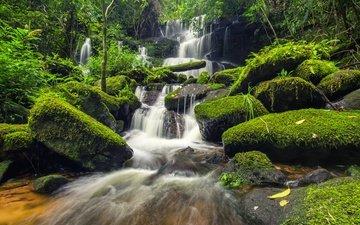 река, камни, лес, водопад, мох, джунгли, ландшафт, красива, тропическая, грин