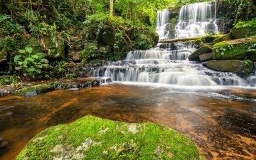 река, лес, водопад, джунгли, ландшафт, красива