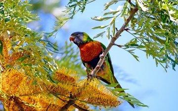 цветы, дерево, птица, попугай